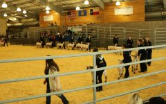 2018 CFISD Livestock Show